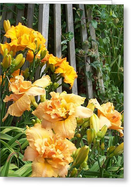 Golden Blossoms Greeting Card by Sandy Collier