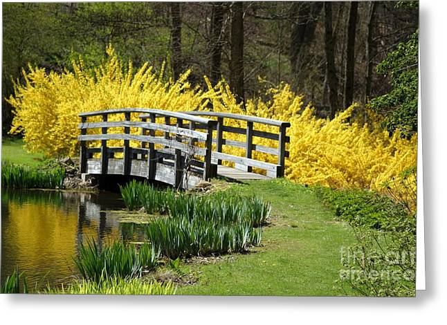 Golden Days Of Spring Greeting Card