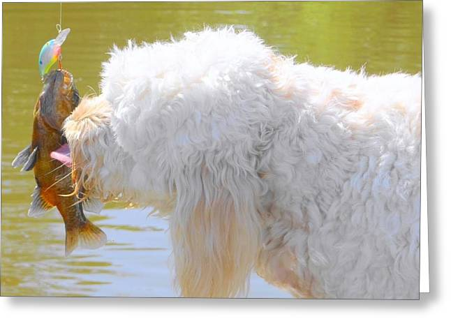 Golden Doodle And Goggle Eye Greeting Card by Betty Berard