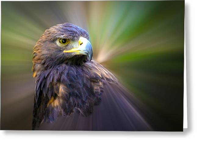 Golden Eagle Fade Greeting Card by Steve McKinzie