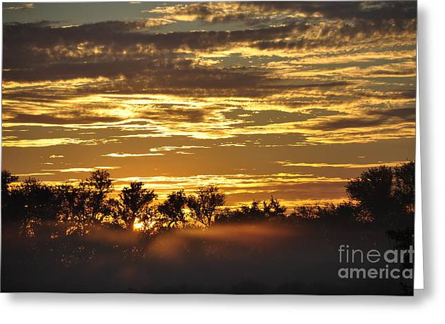Greeting Card featuring the photograph Golden Fog by Tamera James