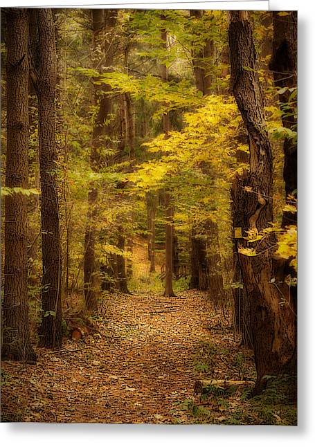 Golden Forest Greeting Card by Cindy Haggerty