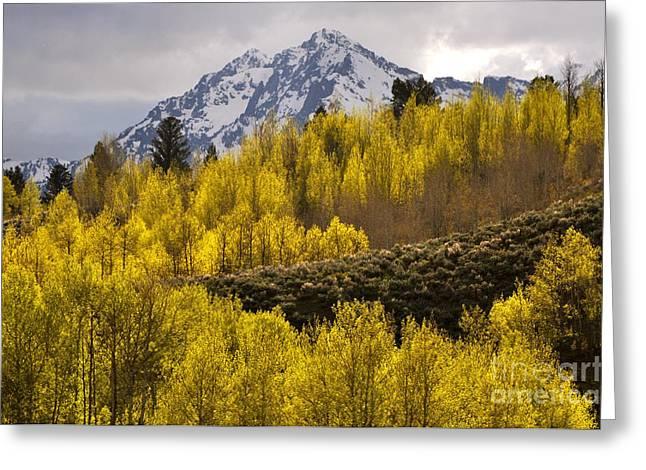 Golden Grand Teton Greeting Card by Johanne Peale