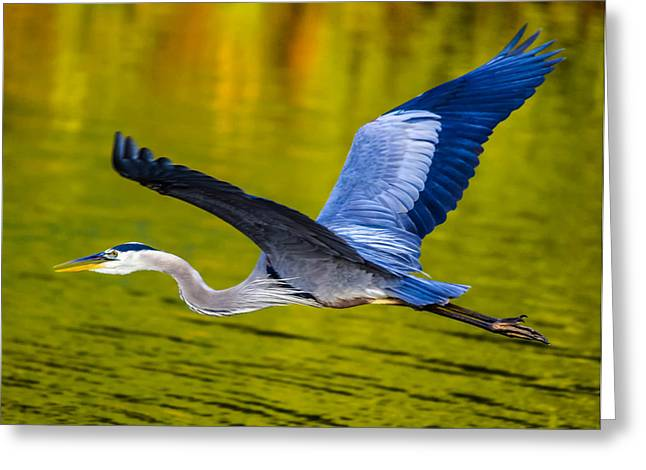 Golden Heron Greeting Card by Brian Stevens