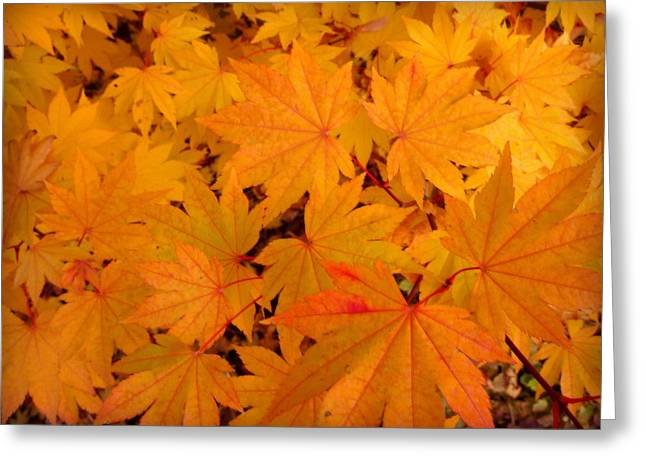 Golden Leaves Of Maple Greeting Card by Cindy Wright
