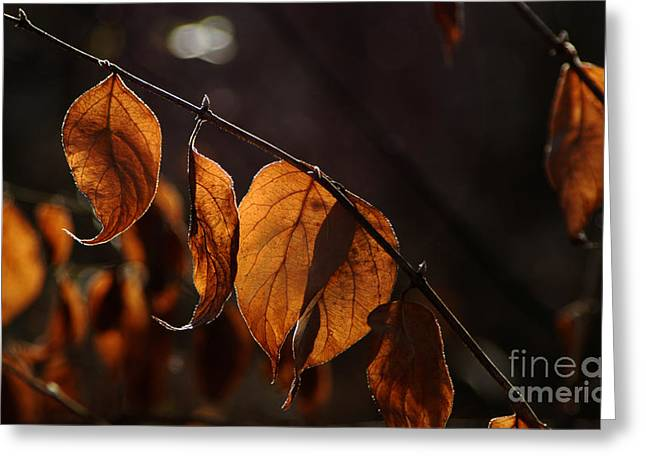 Greeting Card featuring the photograph Golden Leaves by Vilas Malankar