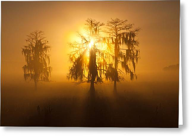 Golden Morning Greeting Card by Claudia Domenig
