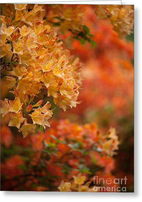Golden Orange Radiance Greeting Card