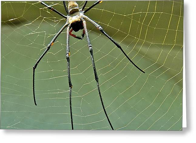Golden Orb Spider Greeting Card