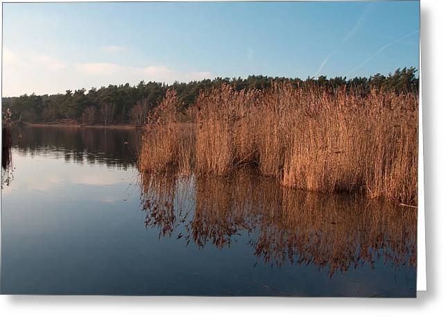 Golden Reeds Greeting Card by Shirley Mitchell