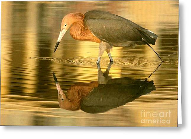 Greeting Card featuring the photograph Golden Reflection by Myrna Bradshaw