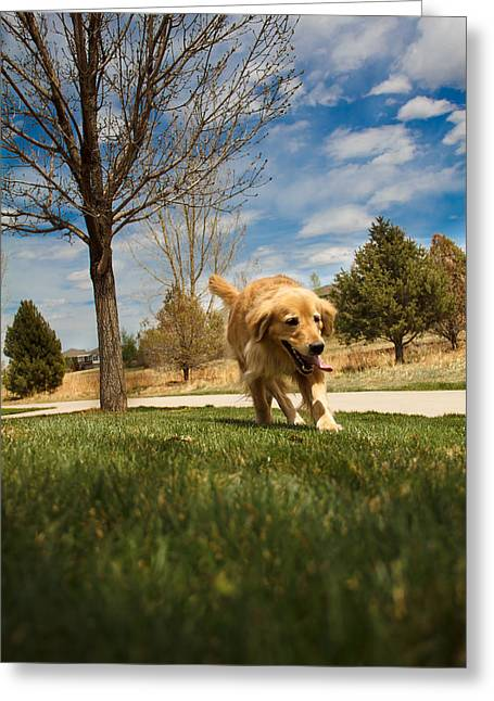 Golden Retriever Greeting Card by Mike Ricci
