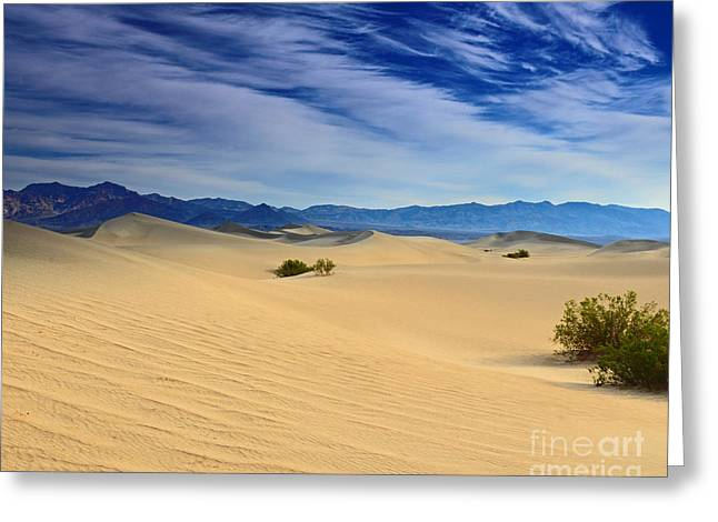 Golden Sand Dunes Death Valley National Park Greeting Card