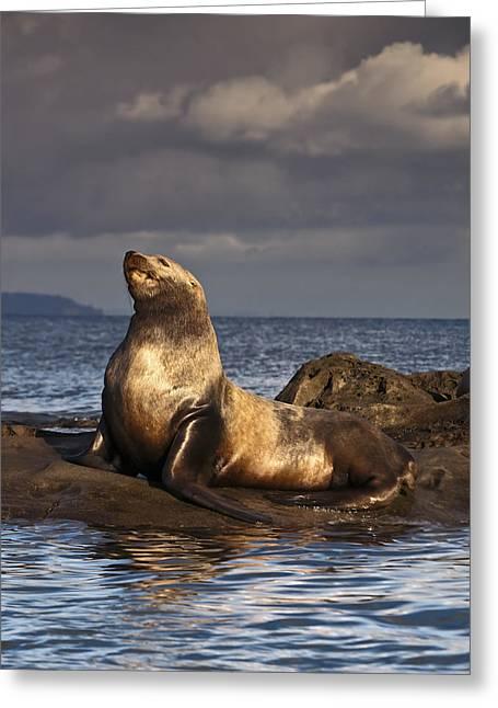 Golden Steller Sea Lion Greeting Card