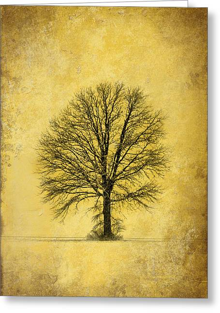 Greeting Card featuring the photograph Golden Tree by Mary Timman