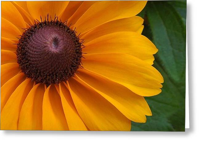 Goldilocks  Flower Greeting Card by Chad and Stacey Hall