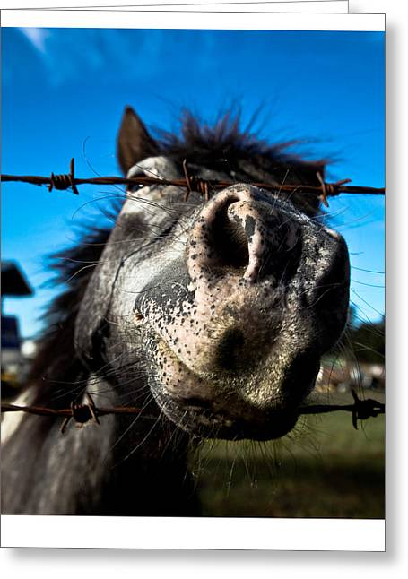 Golly A Curious Horse Greeting Card