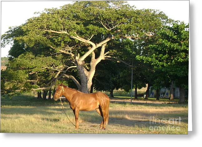 Good Horse At Dawn  Greeting Card by Laurel Fredericks