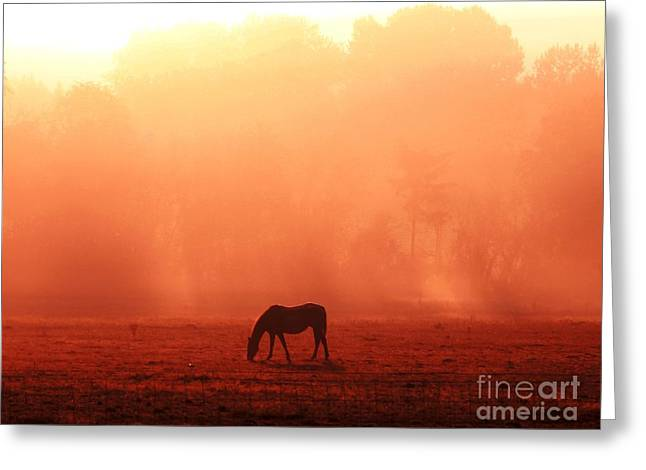 Good Morning Horse Greeting Card