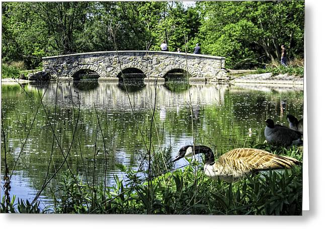 Greeting Card featuring the photograph Goose And Bridge At Silver Lake by Tom Gort