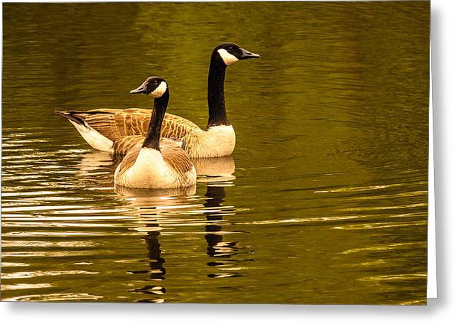 Goose Love Greeting Card by Ken Beatty