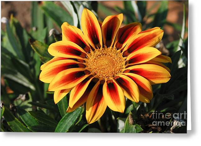 Gorgeous Beauty Greeting Card