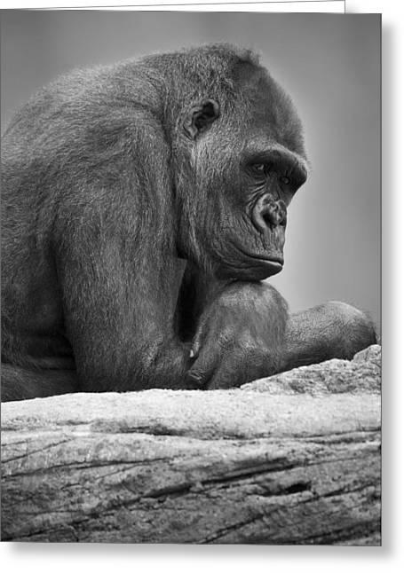 Gorilla Portrait Greeting Card by Darren Greenwood