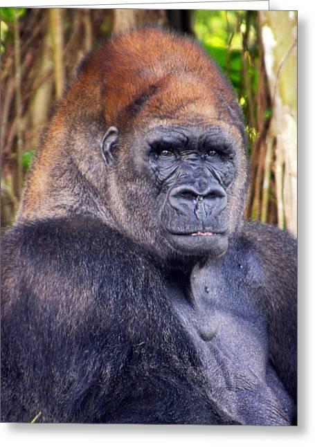 Gorilla Posing Greeting Card by Joe Myeress