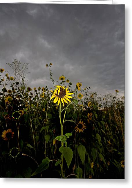 Goth Sunflower Greeting Card by Peter Tellone