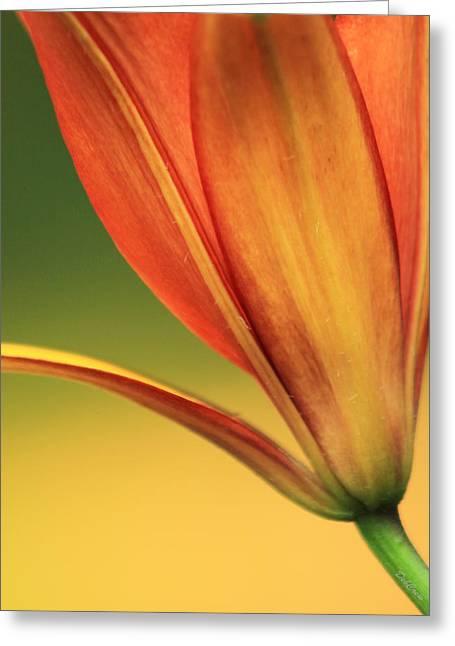 Graceful Greeting Card by Deborah  Crew-Johnson