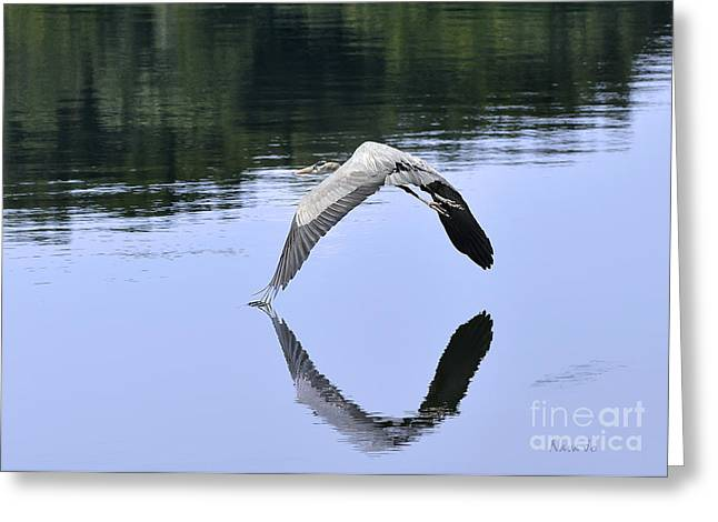 Greeting Card featuring the photograph Graceful Heron by Nava Thompson