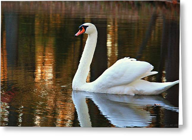 Graceful Swan Greeting Card