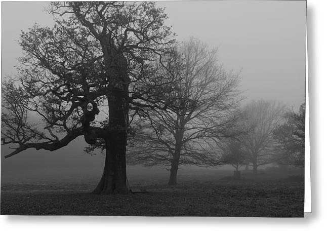 Greeting Card featuring the photograph Gradual Trees by Maj Seda