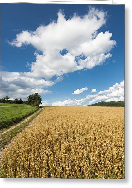 Grainfield Blue Sky Greeting Card by Matthias Hauser