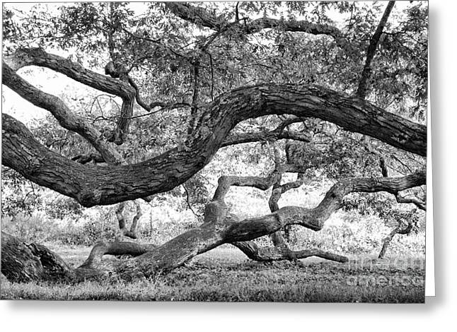 Granby Oak Greeting Card by HD Connelly