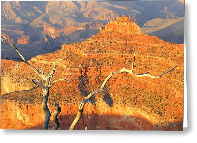 Grand Canyon 40 Greeting Card