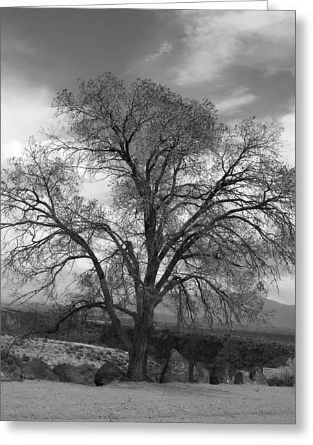 Grand Canyon Life Tree Greeting Card