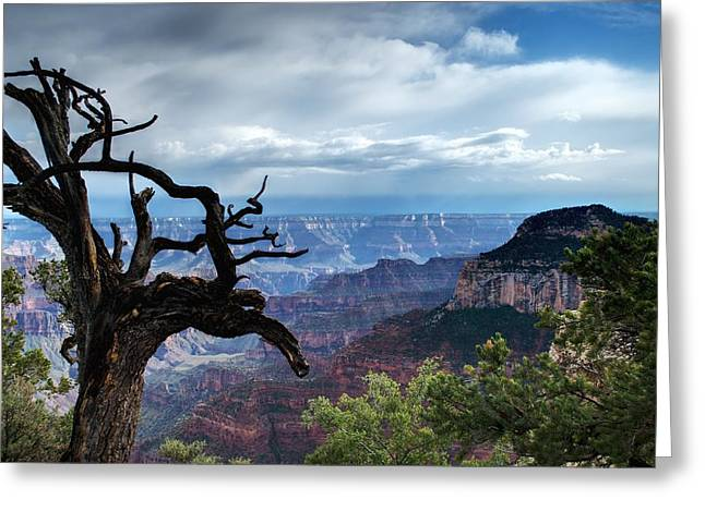 Grand Canyon North Rim After A Storm Greeting Card by C Thomas Willard