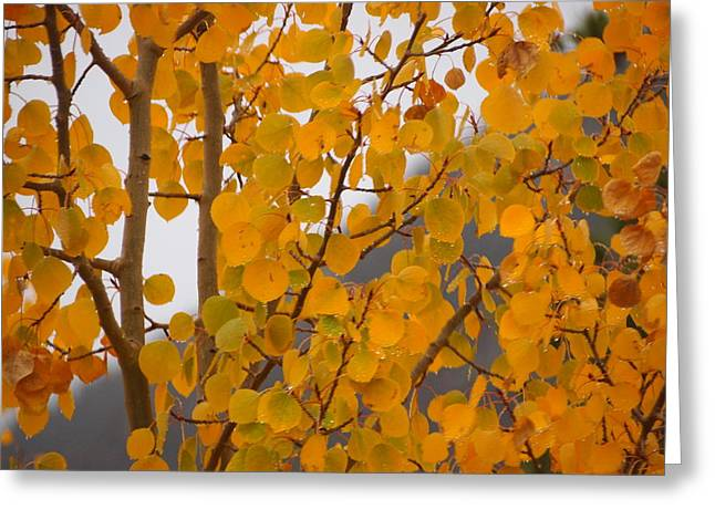 Grand Lake Aspen Greeting Card