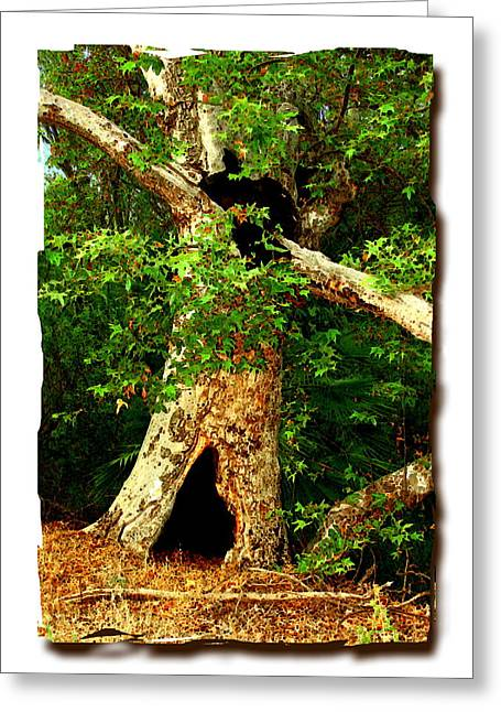 Grand Old Sycamore Tree Ahmanson Ranch Calabasas Greeting Card by Noah Brooks