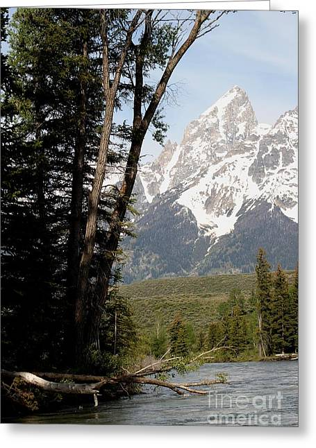 Grand Tetons Vertical Greeting Card by Living Color Photography Lorraine Lynch