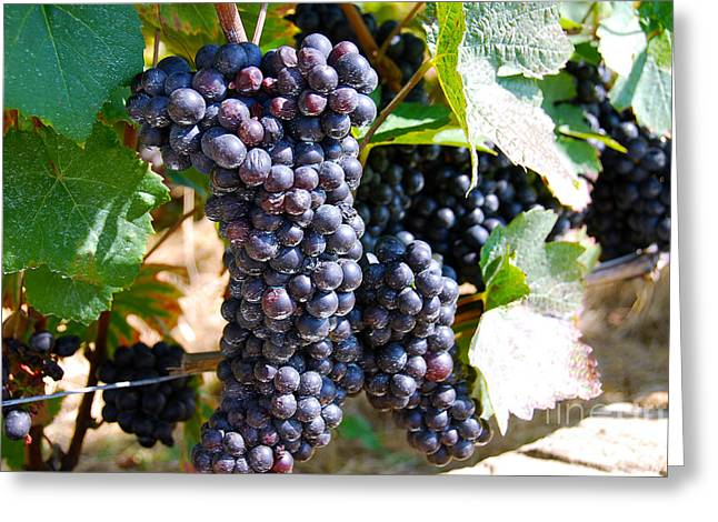Grape Vine Greeting Card by Ivy Ho