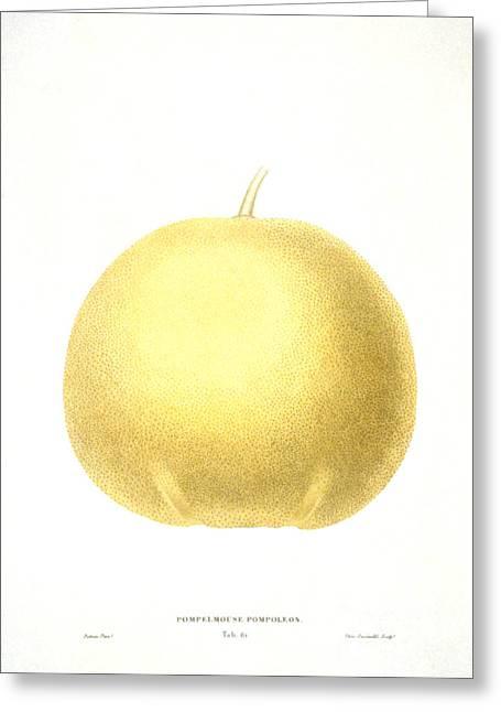 Grapefruit Greeting Card by Granger