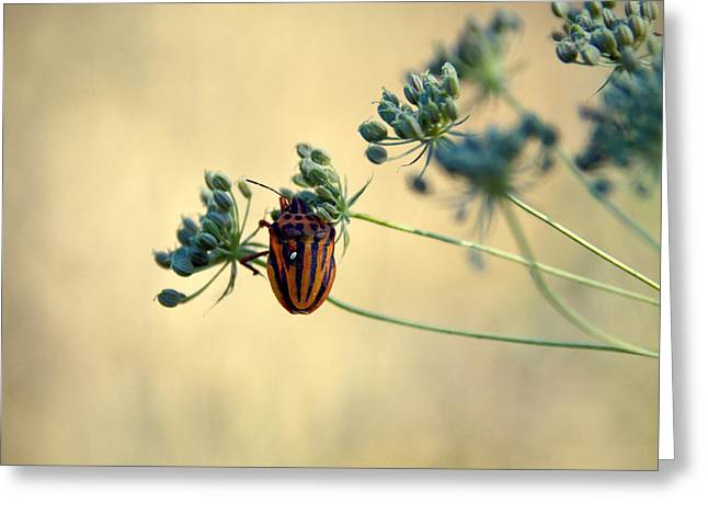 Graphosoma Lineatum Greeting Card by Stelios Kleanthous