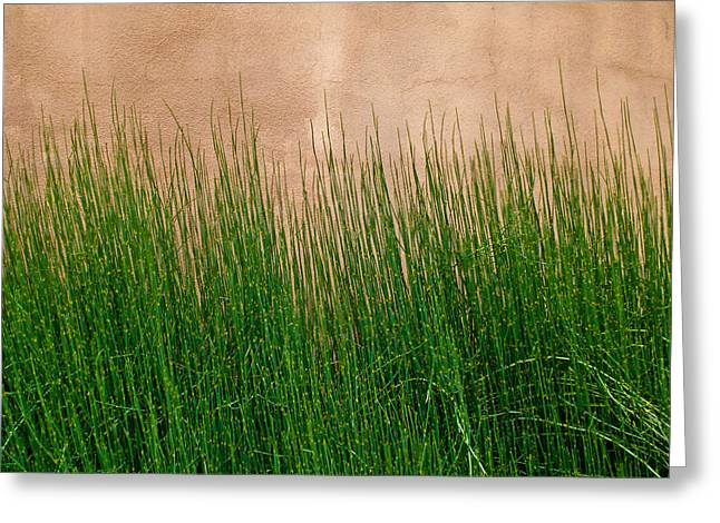 Greeting Card featuring the photograph Grass And Stucco by David Pantuso