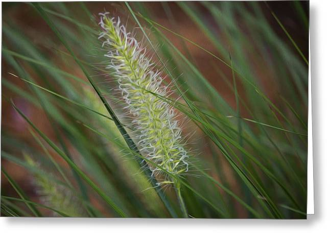 Grass In The Wind Greeting Card by Michel DesRoches
