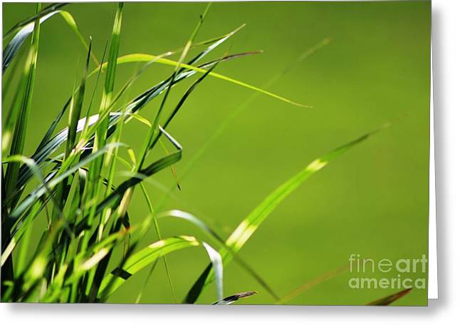 Grass Is Always Greener Greeting Card