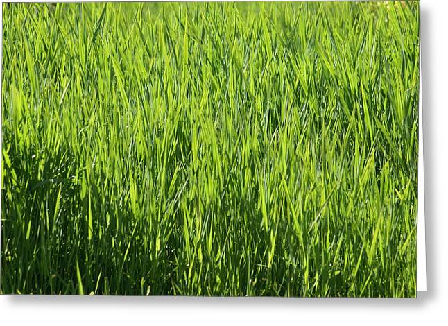 Greeting Card featuring the photograph Grass by Jerry Cahill