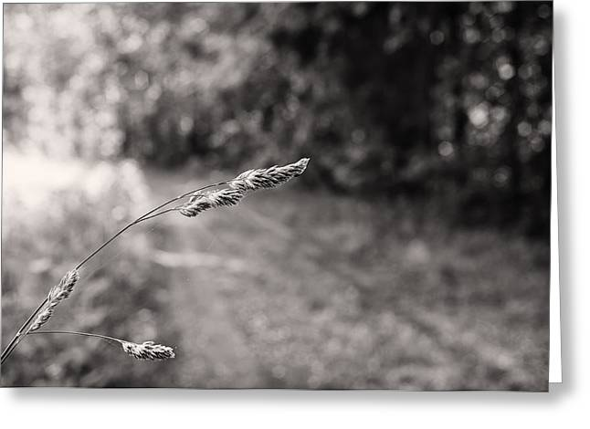 Grass Over Dirt Road Greeting Card