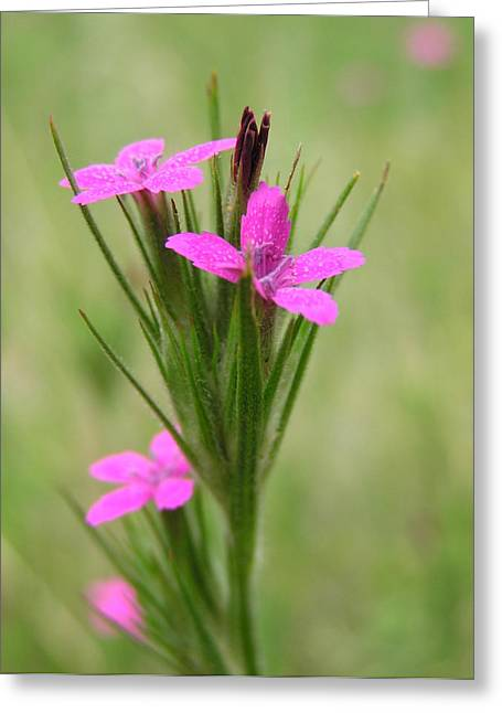 Grass Pink Bouquet Greeting Card